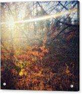 Early Morning Winter Sun Acrylic Print