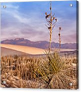 Early Morning Yucca - White Sands - New Mexico Acrylic Print