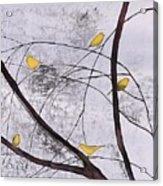 Early Spring 1 Acrylic Print by Carolyn Doe
