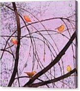 Early Spring 2 Acrylic Print by Carolyn Doe