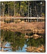Early Spring Marsh Acrylic Print