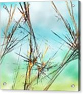 Early Spring Twigs Acrylic Print