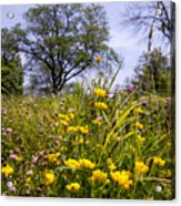 Early Summer Acrylic Print