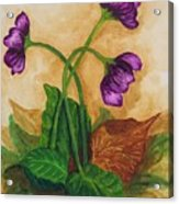Early Violets Acrylic Print