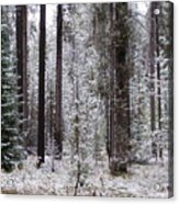 Early Winter Acrylic Print