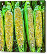 Ears Of Corn Acrylic Print