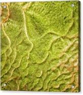 Earth Art 9516 Acrylic Print