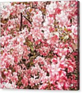 Earth Tones Apple Blossoms  Acrylic Print