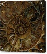 Earth Treasures - Brown Amonite Acrylic Print