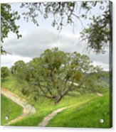 East Ridge Trail -  Spring Acrylic Print