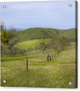 East Ridge Trail Barbed Wire Acrylic Print
