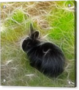 Easter Bunny 3 Acrylic Print