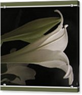Easter Lily Card Acrylic Print