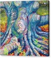 Eastern Beech Tree Acrylic Print