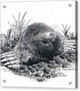 Eastern Mole Acrylic Print