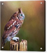 Eastern Screech Owl Red Morph Profile Acrylic Print