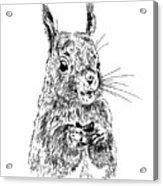Eating Squirrel Acrylic Print