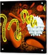 Ebola Virus Acrylic Print