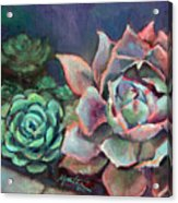 Echeveria Acrylic Print