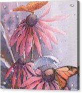 Echinacea And Butterflies Acrylic Print