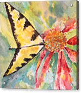 Echinacea Butterfly Acrylic Print