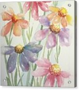 Echinacea Cheyenne Spirit Acrylic Print