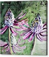 Echinacea Cone Flower Acrylic Print