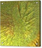 Eclosion  Matutina Acrylic Print