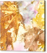 Eco Print 010b Acrylic Print