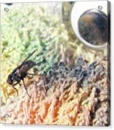 Ed The Fly  Acrylic Print