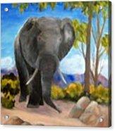 Eddy Elephant Acrylic Print