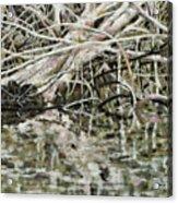 Edge Of Smith Lake Acrylic Print
