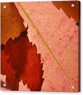 Edgy Leaves Acrylic Print