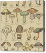 Edible And Poisonous Mushrooms Acrylic Print