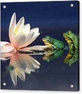 Edible Frog Rana Esculenta Two Frogs Acrylic Print
