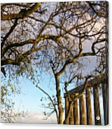 Edinburgh - Caption Hill Trees Acrylic Print