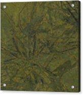 Edition 1 Kelp Acrylic Print