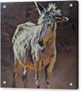 Eeyore Acrylic Print