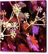 Efeu Ivy Vines Pink Acrylic Print