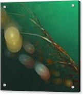 Egg Clutch  Diving The Reef Series Acrylic Print