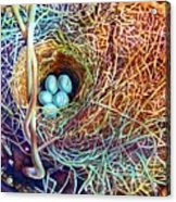 Eggs In A Basket Acrylic Print