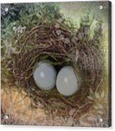 Eggs In A Nest Acrylic Print