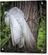 Egret - 2679 Acrylic Print