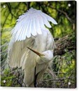 Egret - 2975 Acrylic Print