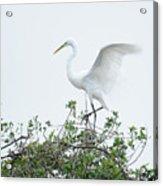 Egret Balance Acrylic Print