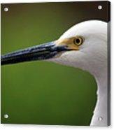 Egret Bird Acrylic Print