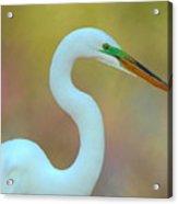 Egret Curves Acrylic Print