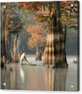 Egret Enjoying Foggy Morning In Atchafalaya Acrylic Print
