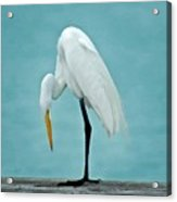 Egret Foot Inspection Acrylic Print