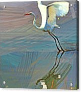 Egret Getting Ready For Take Off Acrylic Print